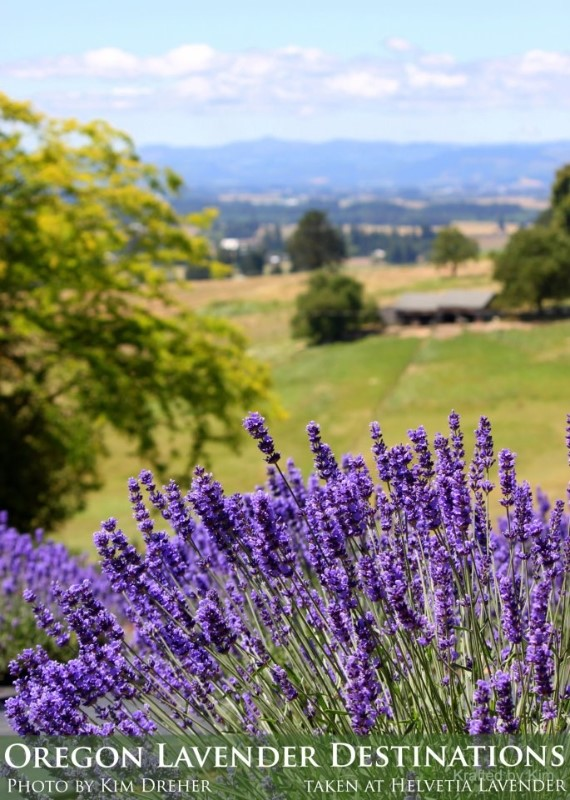 Helvetia Lavender Farms - used with permission